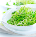Microgreens. Healthy salad