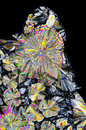 Microscopic view of citric acid crystals in polarized light crossed polarizers Royalty Free Stock Images