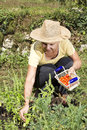 Mid aged woman doing some gardening Stock Photography