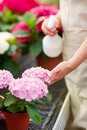 Mid section of lady watering fresh flowers Royalty Free Stock Photography
