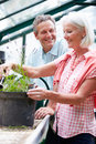 Middle aged couple working together in greenhouse pruning plants smiling Stock Images