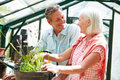 Middle aged couple working together in greenhouse smiling at each other Royalty Free Stock Photo