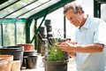 Middle aged man working in greenhouse using secateurs concentrating Stock Photos