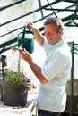 Middle aged man working in greenhouse watering plants smiling Stock Photos