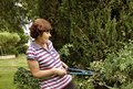 Middle aged woman tackling prickly rose bush with secateurs a uses long armed to tackle a very Stock Photos