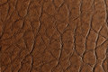 Middle brown leather texture Stock Image