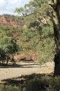 Scenery, Ikara-Flinders` Ranges National Park, SA, Australia