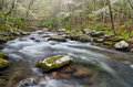 Middle Prong spring, Great Smoky Mountains Royalty Free Stock Photo