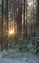 Midwinter sun Royalty Free Stock Photo