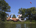 image photo : Mixed breed dog diving into a pond