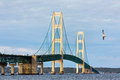 Mighty mac and seagull a flies near the mackinac bridge a span connecting the upper lower peninsulas of the state of michigan Stock Image