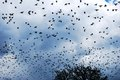 Migratory birds in the autumn star time Stock Photos