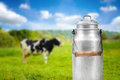 Milk can against cow pasture meadow old aluminum Royalty Free Stock Photography