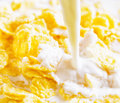 Milk pouring into corn flakes Stock Photography