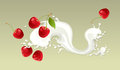 Milk splash with cherry on light background Royalty Free Stock Photo