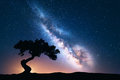 Milky Way with alone old crooked tree on the hill Royalty Free Stock Photo