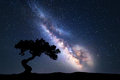 Milky Way with alone old tree on the hill Royalty Free Stock Photo