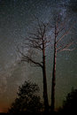 Milky way and barren trees the stretches across the sky behind Royalty Free Stock Photos