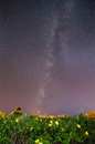 Milky way over allamanda flower garden contain noise and moving stars phufoilom udonthani thailand Stock Photos