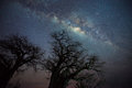 Milky way over baobab trees long exposure and high iso shot of silhouette of tanzania Stock Photos