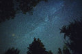 Milky way seen through trees on a clear sky Royalty Free Stock Photos