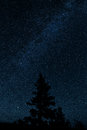 Milkyway with a tree pinetree in the foreground Stock Photography