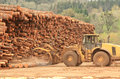 Mill ops large wheeled front end log loader working the log yard at a lumber processing that specializes in small logs Royalty Free Stock Image