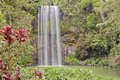 Millaa Millaa tropical waterfall Royalty Free Stock Images