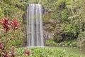 Millaa Millaa tropical waterfall Royalty Free Stock Photo