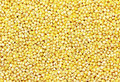 Millet Grains Stock Photography