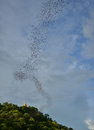 Million of bats seeking for food in evening thailand country side Stock Photography