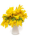 Mimosa flowers flower in a white vase Royalty Free Stock Photos