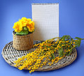 Mimosa and primrose close notebook blank page for text next to a branch of flowers on a blue background Royalty Free Stock Images