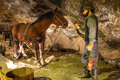 Miner and horse in Wieliczka, Poland. Stock Images