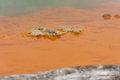 Mineral deposits in champagne pool waiotapu rotorua new zealand Stock Images