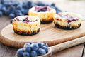Mini Blueberry Cheesecakes Royalty Free Stock Photo