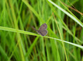 Mini butterfly and green grass Stock Image