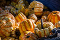Mini gourds Stock Image
