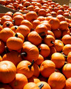 Mini Pumpkins Stock Image