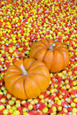 Mini Pumpkins in Candy Corn Stock Photos