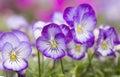 Mini violet flower