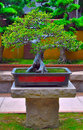 Miniature bonsai tree Stock Photo