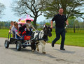 Miniature horse pulling cart full of children the london harness parade as it is known today takes place annually on easter monday Royalty Free Stock Photography