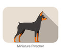 Miniature pinscher breed flat icon design
