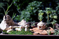 Miniature Pot Garden