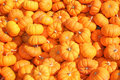 Miniature Pumpkins Stock Images