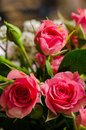 Miniature roses in bouquet Royalty Free Stock Image