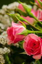 Miniature roses in bouquet Royalty Free Stock Images