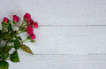 Miniature roses on white boards