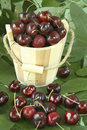 Miniature wooden bucket with fresh cherries. Stock Photography